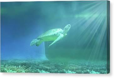 Tropical Tortoise Swimming Underwater  Canvas Print by Art Spectrum