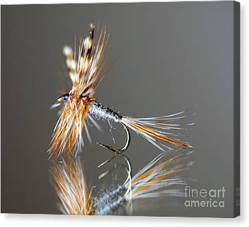 Trout Fly 2 Canvas Print