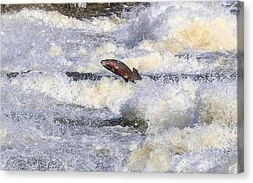 Canvas Print featuring the digital art Trout by Robert Pearson