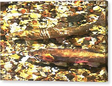 Trout Stream Canvas Print by Greg Hammond