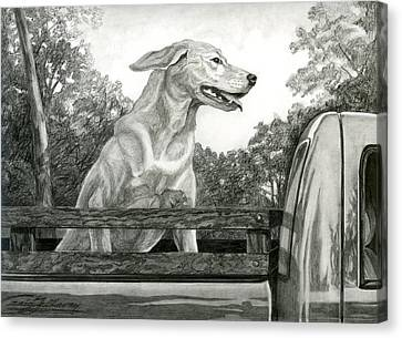 Truck Queen Study Canvas Print by Craig Gallaway