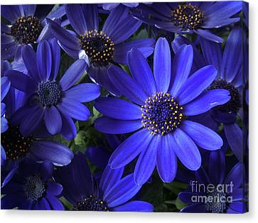 True Blue Baby Canvas Print by Dorothy Lee