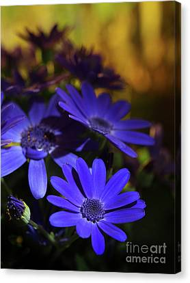 True Blue In The Late Afternoon Sunlight 2 Canvas Print by Dorothy Lee