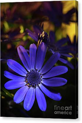 True Blue In The Late Afternoon Sunlight 3 Canvas Print by Dorothy Lee