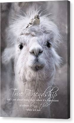 Canvas Print featuring the photograph True Friendship by Robin-Lee Vieira