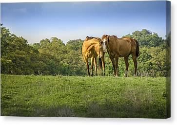 True Love Canvas Print by Debbie Karnes