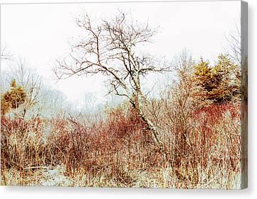 Trumbauersville Walking Path Canvas Print by Mother Nature
