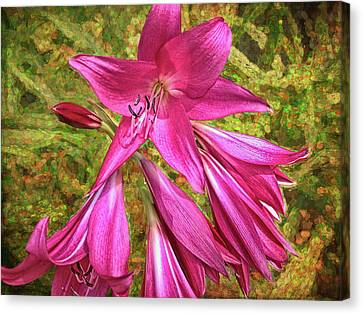 Canvas Print featuring the photograph Trumpet Flowers by Lewis Mann