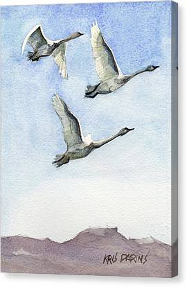 Nature Study Canvas Print - Trumpeter Swan Study by Kris Parins
