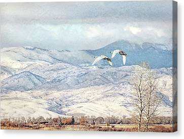 Canvas Print featuring the photograph Trumpeter Swans Winter Flight by Jennie Marie Schell