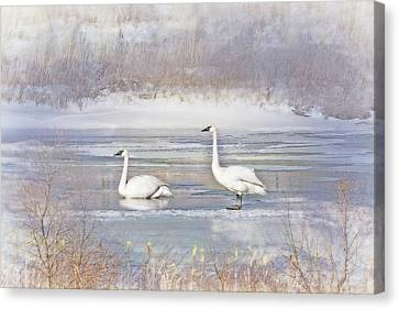 Canvas Print featuring the photograph Trumpeter Swan's Winter Rest by Jennie Marie Schell