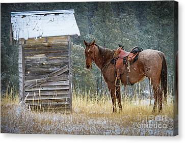 Toilet Canvas Print - Trusty Horse  by Inge Johnsson
