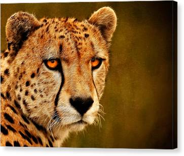 Cheetah Canvas Print - Try Me by Ricky Barnard