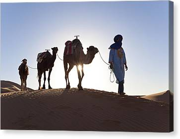 Tuareg Man With Camel Train, Sahara Desert, Morocc Canvas Print by Peter Adams