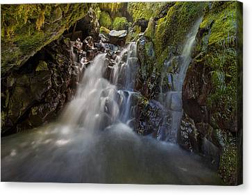 Tucked Away In Gorton Creek Canvas Print by David Gn