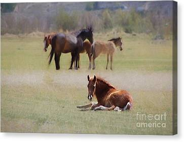 Canvas Print featuring the photograph Tuckered Out by Benanne Stiens