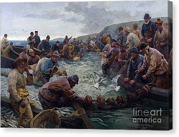 Tucking A School Of Pilchards Canvas Print by Percy Robert Craft