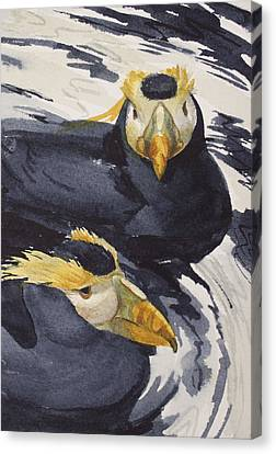 Tufted Puffins Canvas Print