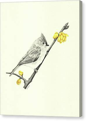 Tufted Titmouse Canvas Print by Belinda Keal