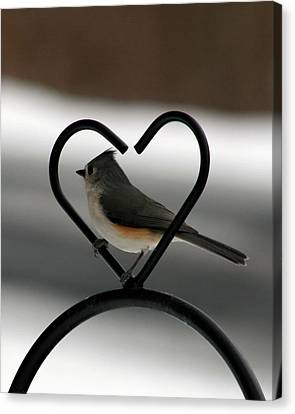 Tufted Titmouse In A Heart Canvas Print