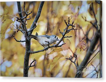 Canvas Print featuring the photograph Tufted Titmouse In Autumn by Kerri Farley