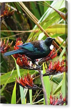 Canvas Print featuring the photograph Tui In Flax by Angela DeFrias