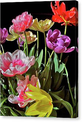 Canvas Print featuring the photograph Tulip 8 by Pamela Cooper