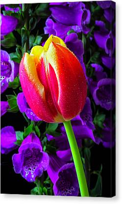 Tulip And Foxglove Canvas Print by Garry Gay