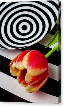 Tulip And Graphic Plates Canvas Print by Garry Gay