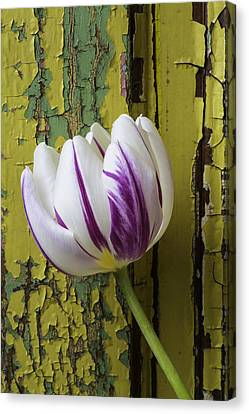 Tulip And Old Wall Canvas Print