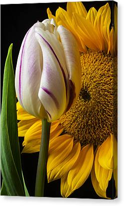 Tulip And Sunflower Canvas Print