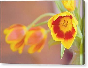 Canvas Print featuring the photograph Tulip Beauty by Deborah  Crew-Johnson