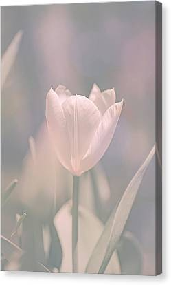 Canvas Print featuring the photograph Tulip by Bob Orsillo