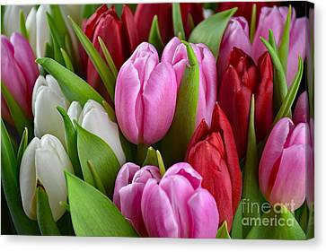 Tulip Bouquet Canvas Print