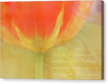 Tulip Canvas Print by Catherine Alfidi