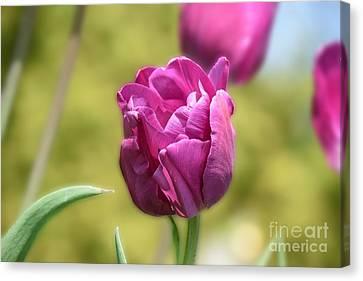Tulip Charm Canvas Print by Ludmilla Resch