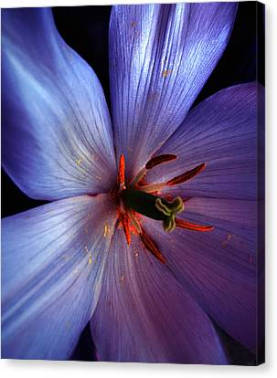 Tulip Convert Canvas Print by Gwyn Newcombe
