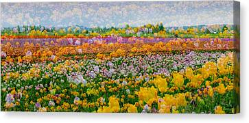 Canvas Print featuring the photograph Tulip Dreams by Tom Vaughan