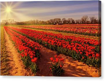 Canvas Print featuring the photograph Tulip Farm Sunset by Susan Candelario