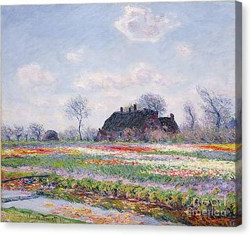 Tulip Fields At Sassenheim Canvas Print by Claude Monet