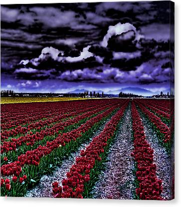 Hdr Landscape Canvas Print - Tulip Fields by David Patterson