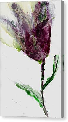Tulip For Canada Day Canvas Print