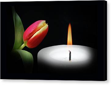 Tulip In Candle Light. Canvas Print by Terence Davis
