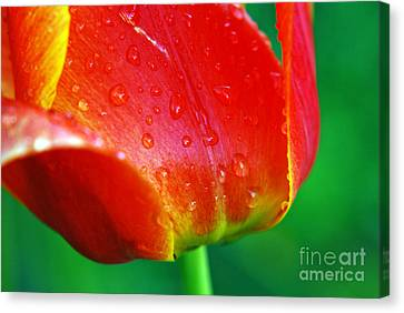 Canvas Print featuring the photograph Tulip by Lila Fisher-Wenzel
