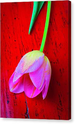 Pink Tulip Canvas Print - Tulip On Red Table by Garry Gay
