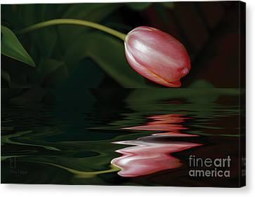 Tulip Reflections Canvas Print by Elaine Teague