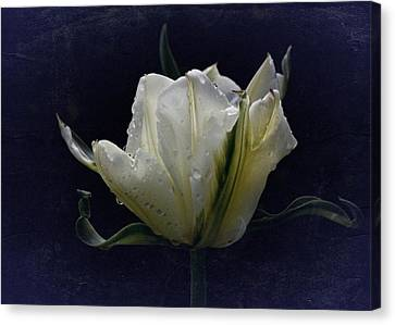 Canvas Print featuring the photograph Tulip Tears by Richard Cummings