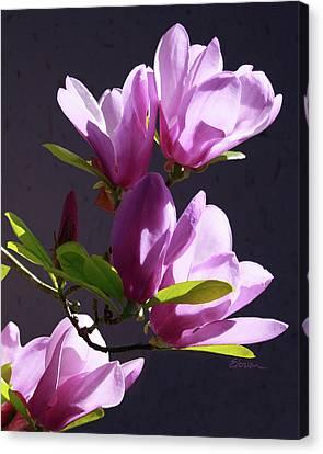 Tulip Tree Canvas Print by Elorian Landers