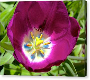 Canvas Print featuring the photograph Tulip With Garden Spider by Trever Miller