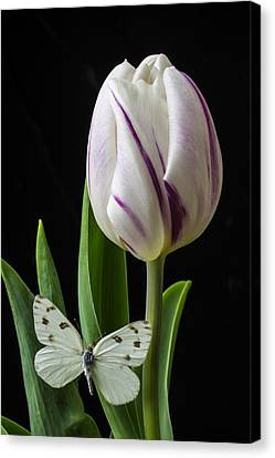 Tulip With White Butterfly Canvas Print